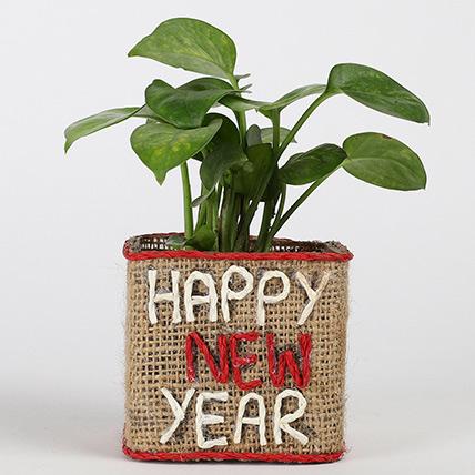 Money Plant In New Year Glass Vase: Money Tree Plants