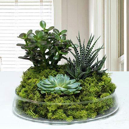 Small Glass Green Wonder: