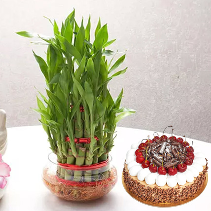3 Layer Bamboo With Black Forest Cake: Happy Fathers Day Cakes