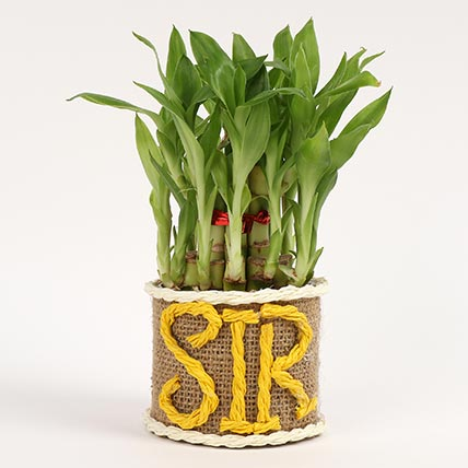 Elegant Lucky Bamboo For Sir: Bamboo Plant