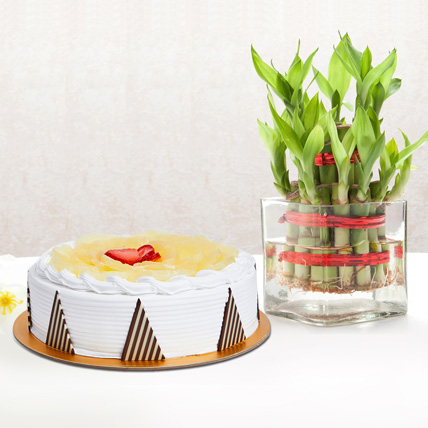 Pineapple Cake and Lucky Bamboo Combo: