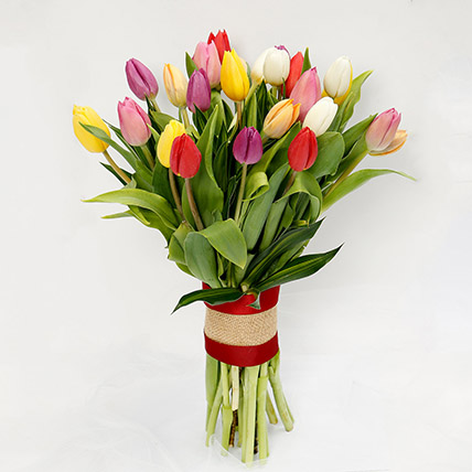 25 Vibrant Tulips Bunch: Tulip Flower