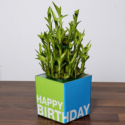 3 Layer Bamboo Plant For Birthday: Plants