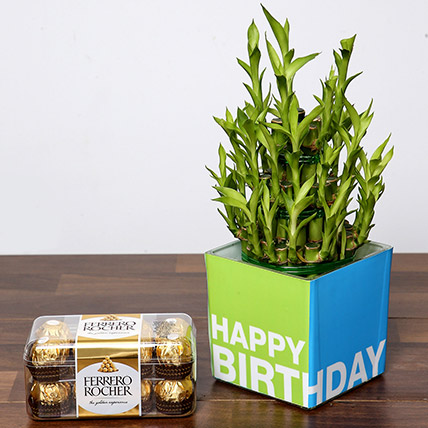3 Layer Bamboo Plant and Chocolates For Birthday: