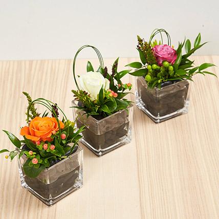 Set Of 3 Rose Vase Arrangements: Eid Flowers