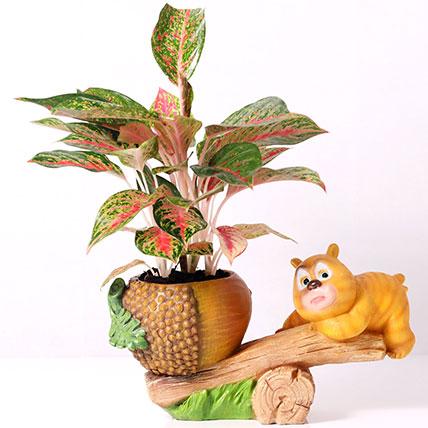 Beautiful Aglaonema Plant in Bear Design Pot: