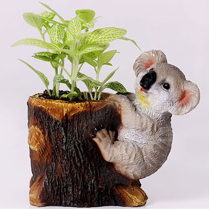 Classic Fittonia in Koala Pot: Desktop Plants