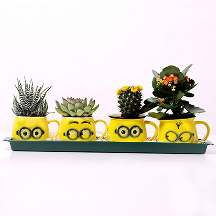 Emoticon Mugs with Plants: Best Flowering Plants