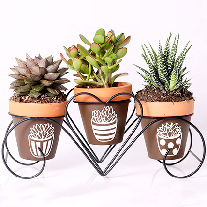 Set of 3 Plants in Triplet Pot Base: Plants in Dubai