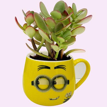 Smiley Pot of Crassula Plant: