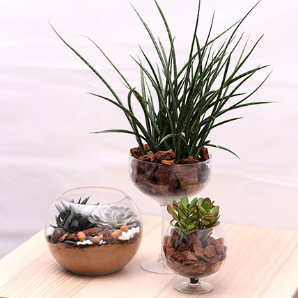 3 Beautiful Plant Arrangements: Air Purifying Indoor Plants