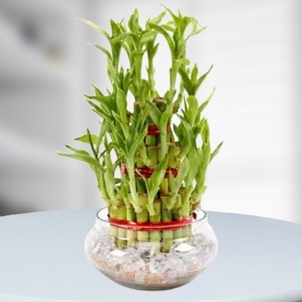 Good Luck Plant 3 Layers: Business Gifts