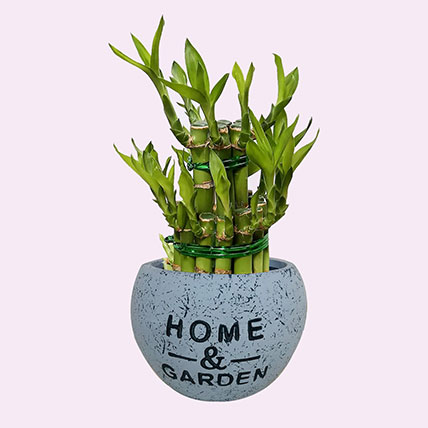 Bring Luck with 2 Layer Bamboo: Indoor Plants in Dubai