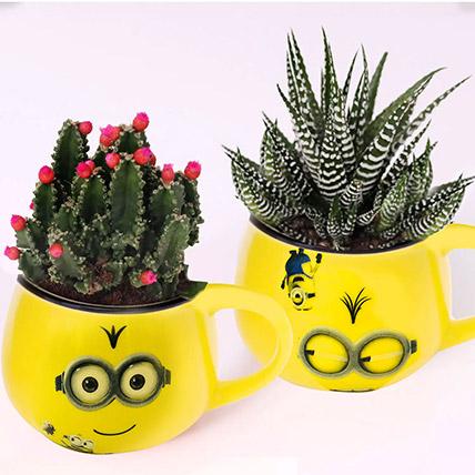 Cactus and Haworthia In Smiley Pots: Indoor Plants in Dubai