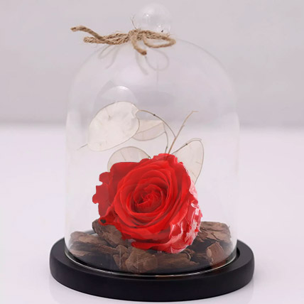 Red Forever Rose In Glass Dome: Wedding Anniversary Flowers