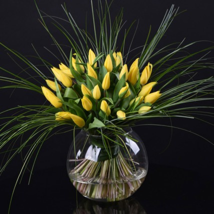 Vivid Tulip Delight: Exotic Flowers