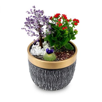 Wish Tree garden: Plant Combos