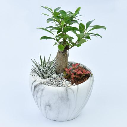 Bonsai Garden: Plants for Anniversary