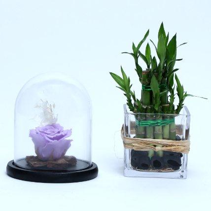 Best of Luck Forever: Plants for Birthday Gift