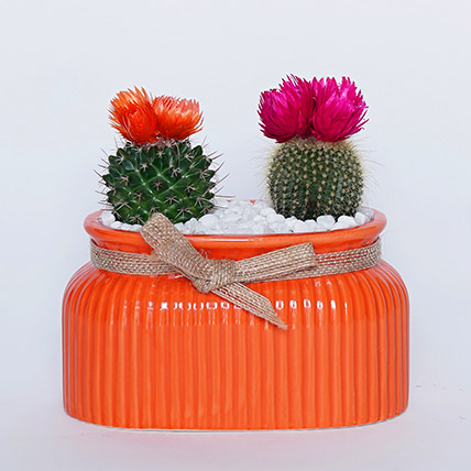 Cactus in Orange Planter: Cactus Plants and Succulents Plants