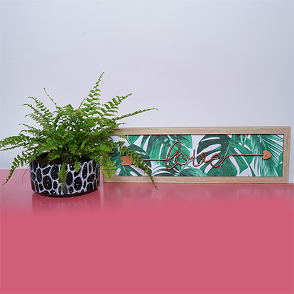 Nephroelepsis Plant With Frame: Plant Combos