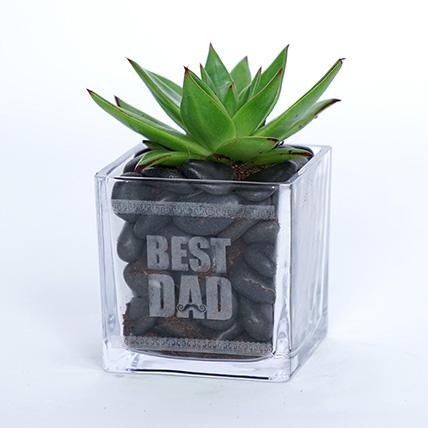 Green Echeveria Plant In Best Dad Square Glass Pot: Plants