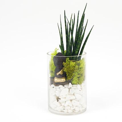 Prosperity to You: Office Plants