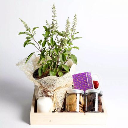 Sweet Diwali Hamper With Tulsi: Lucky Plants