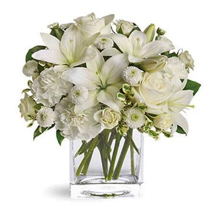 White Beauty: