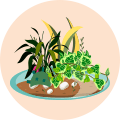 Dish Garden Online