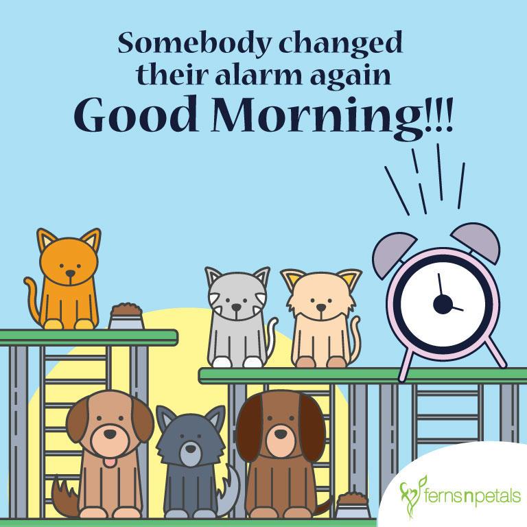 good morning funny greetings