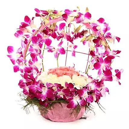 Vibrant Orchid Celebration